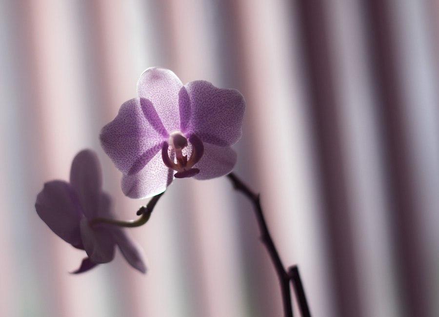 Цветы и макро